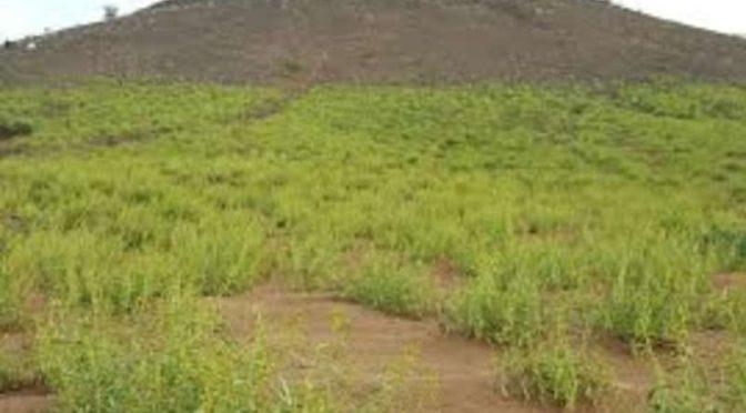 «Зелёная гора» в округе Тураба привлекает отдыхающих