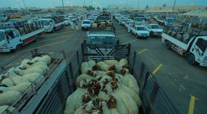 Рынок скота в Бурайде