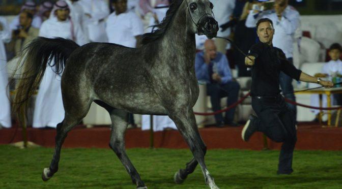 Его Высочество губернатор Мекки почтил своим визитом выставку арабских скакунов в Джидде