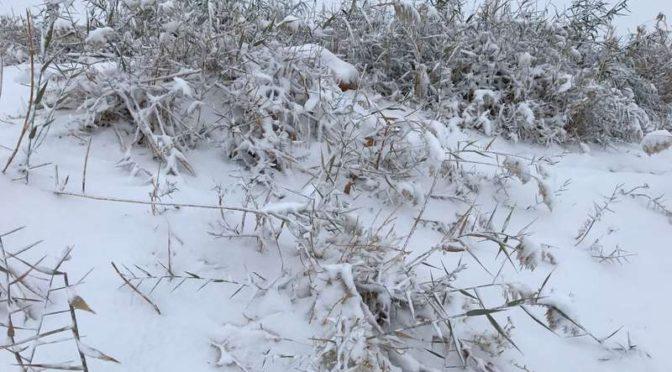 Снег, выпавший в округе Тариф затруднил жителям передвижение перед рассветом