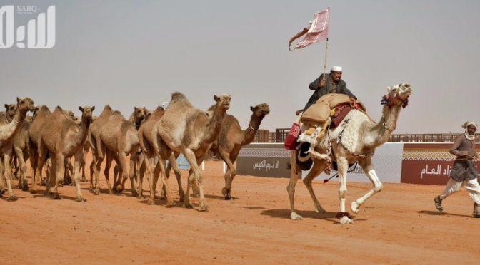 Фестиваль верблюдов им.Короля Абдулазиза «Народная деревня в пустыне»