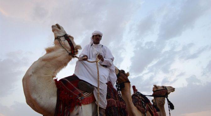 Экскурсия по выставке верблюдов