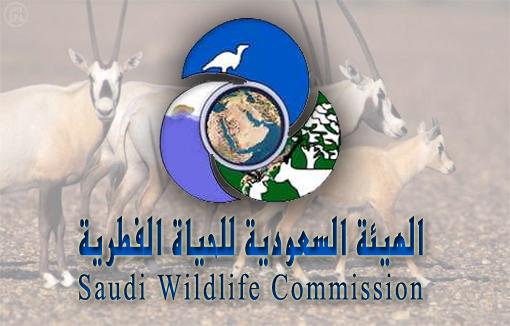 Комитет по дикой природе представляет животное разнообразие земли Королевства на фестивале «рынок Указ»