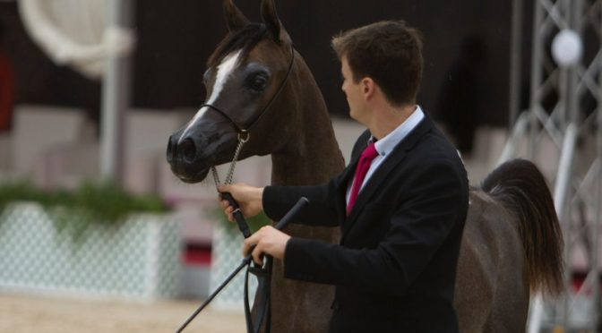 Под патронажем принца Сауда бин Наифа открылся фестиваль чистокровных арабских лошадей в Восточной провинции