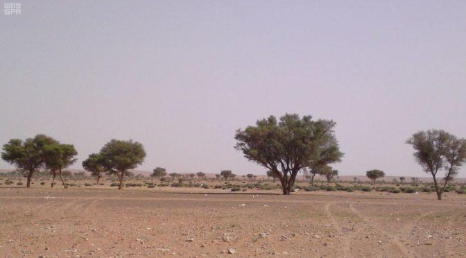 Заповедники Королевства восстанавливают естественную экологическую среду Аравийского полуострова