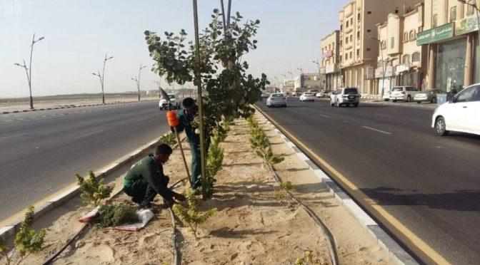Муниципалитет Катифа высаживает более 266 тыс.деревьев для увеличения объёма зелёной зоны