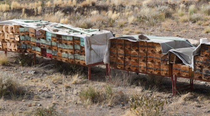 Пчеловоды провинции Асир совершают перезды летом и зимой для повышения добычи мёда и сохранения ульев