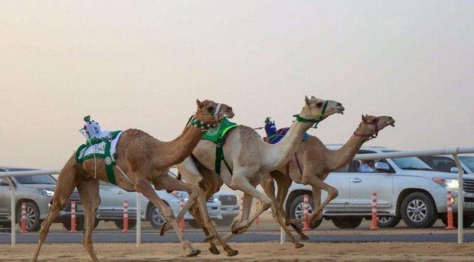 Фестиваль верблюдов наследного принца