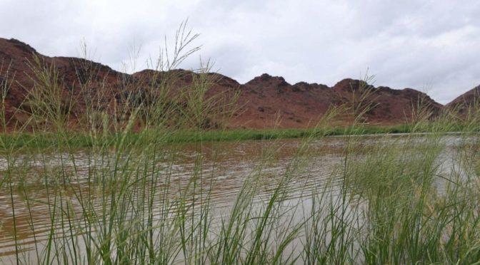 Фотокорреспондент «ВАС» запечатлел заполнение дождевыми потоками вади и ущелий в провинции Лучезарной Медины