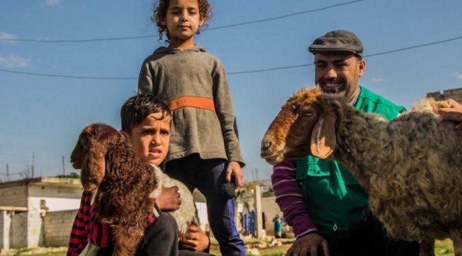 Центр гуманитарной помощи им.Короля Салмана продолжает поддержку стимулирующих проектов для сирийских семей в сфере животноводства