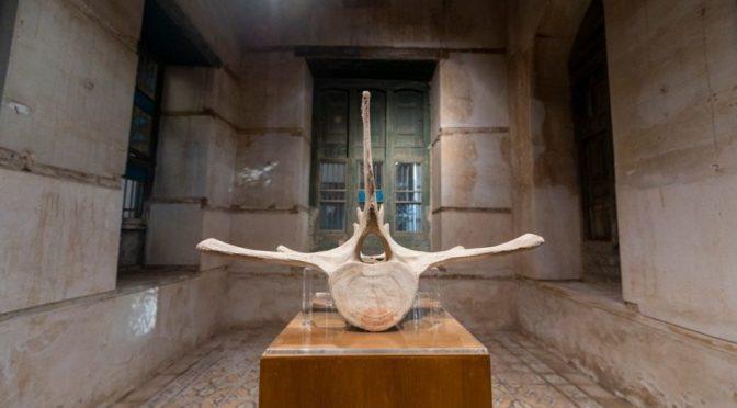 14 деятелей искусств воплотили влияние нефти на Королевство в выставке «Нафассах»