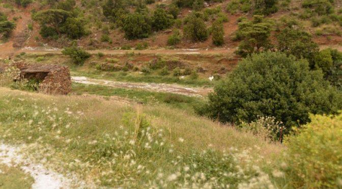 Обильные и умеренные дожди прошли над провинцией Асир