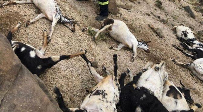 Удар молнии убил 22 овцы в ал Зарайя Балкарн