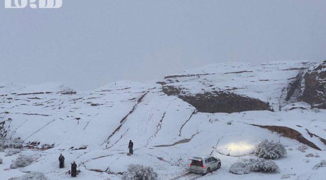 Сегодня снег покрыл возвышенности Табука и административные центры