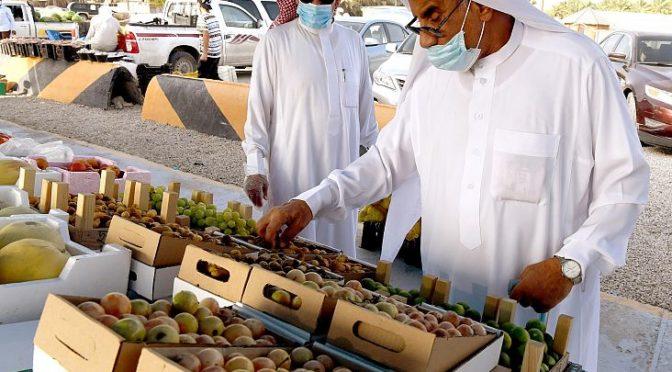 Фермеры  округа аль-Ахса собирают самый ранний урожай фиников