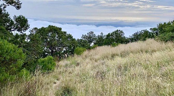 Облака встречаются с вершиной горы ас-Сауда в великолепном виде на западе от Абхи