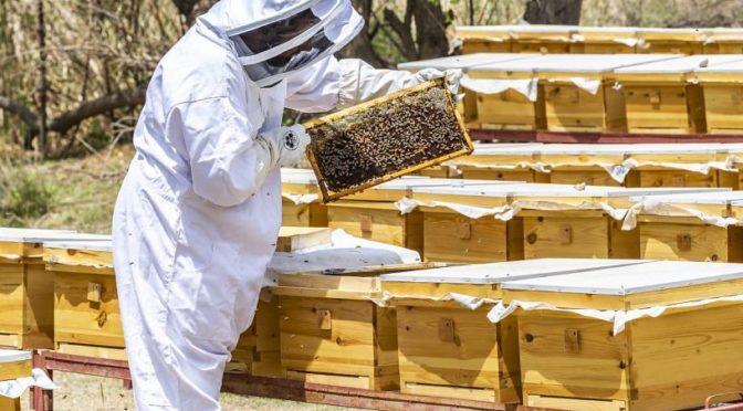 Туристические объекты в Королевстве: город 800 тыс.кг мёда