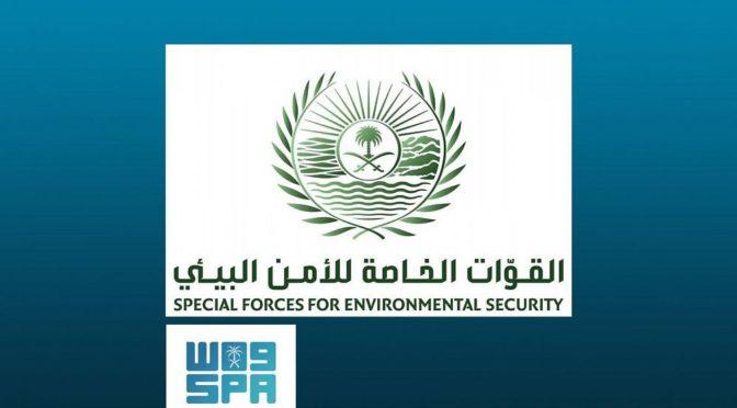 Специальные силы экологической безопасности сообщили о расследовании относительно видеоролика