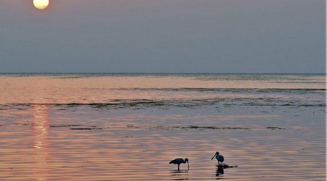 Из туристических направлений Королевства: побережье перелётных птиц