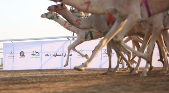 Наследный принц распорядился провести в Королевстве несколько верблюжьих бегов