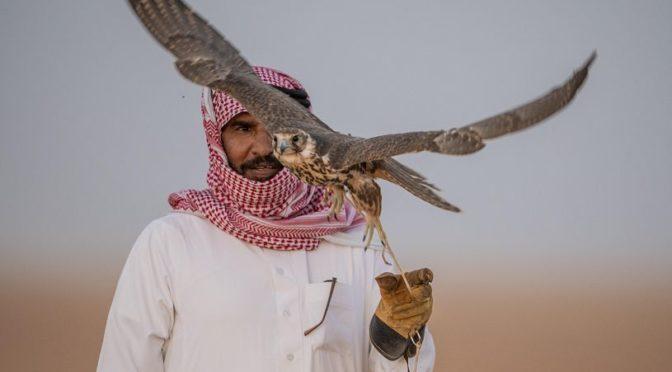 Пустыня аль-Хамад на северной границе: ежегодное место встречи сокольников