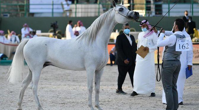 Второй день в Джидде продолжается  Конкурс красоты  арабских лошадей