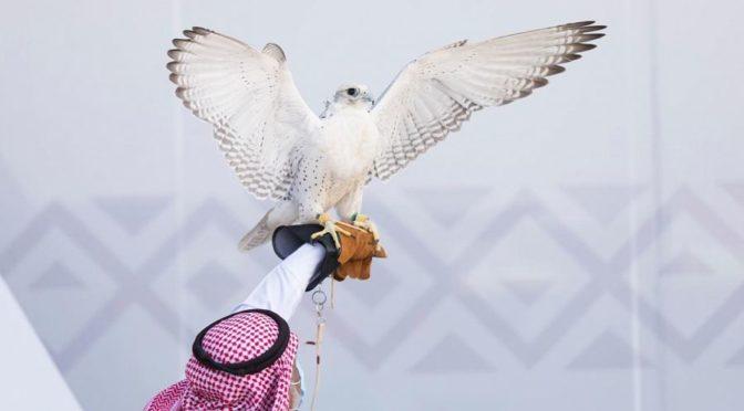 Конкурс экстерьера соколов начинается завтра на фестивале им.Короля Абдулазиза