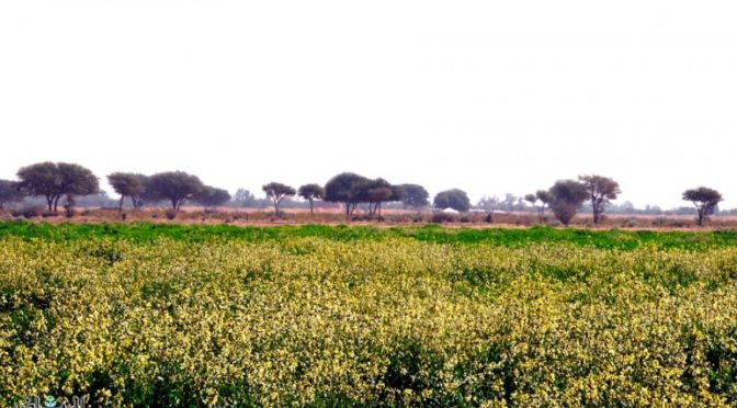 Местность Сармадаъ в провинции Эр-Рияд украсилась и покрылась зеленью