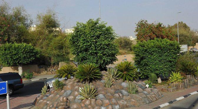 Поддержание 300 тыс.кв.м. зелёных насаждений и высадка 22 тыс.деревьев для поддержания городского ландшафта в Таифе