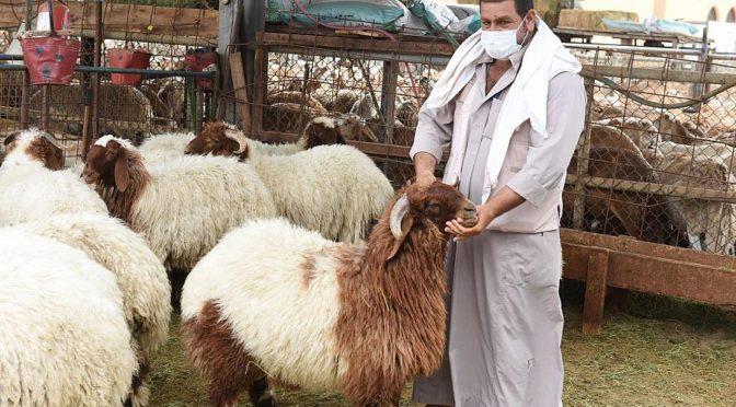 Фотокорреспондент «ВАС» запечатлел спрос подданных и резидентов на закупку скота в Джидде в рамках подготовки к Рамадану