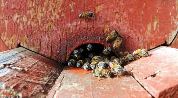 5000 тонн мёда ежегодно проивзодится в Королевстве