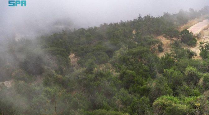 Туманы Бахи – великолепное зрелище, охватывающее дороги, сады и парки провинции