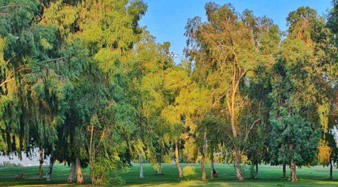 Муниципалитет Северной пограничной провинции завершил подготовку 2 млн.кв.метров садов и парков для приёма посетителей в Ид аль-Адха