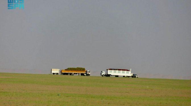 Пустыни севера вади Давасир покрываются зеленью